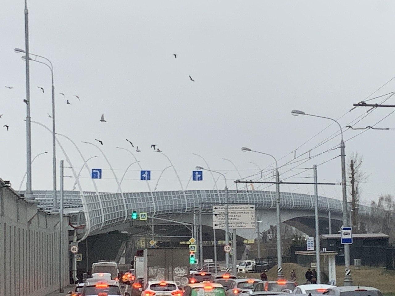 Астаховский мост на участке Северо-Восточной хорды станет шире