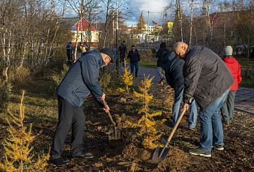 Жители поселка Искателей Ненецком автономного округа высадили ели в «Детском парке»