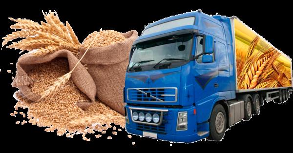 Перевозка зерна – быстро, безопасно, доступно